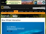 Blue Whale Interactive -- National Geographic